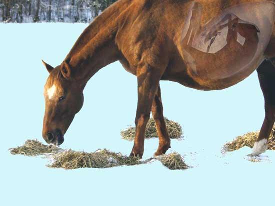 hur länge är hästen dräktig
